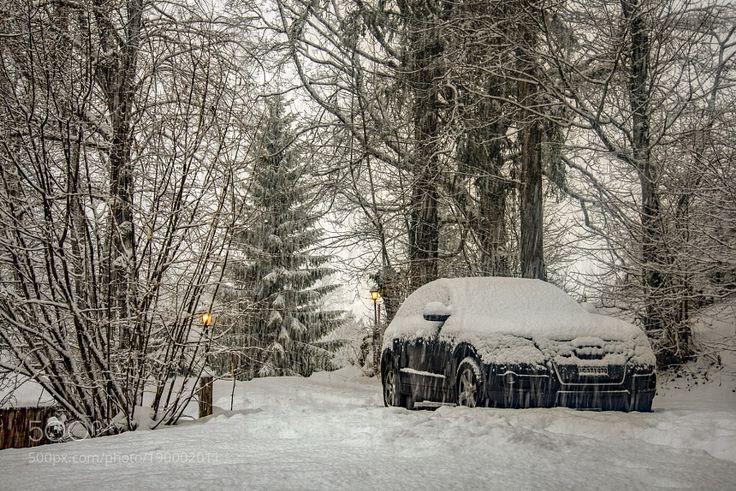 Popular on 500px : Winter Time 9  Snowfall by mirosu
