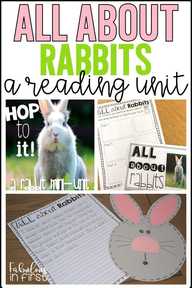 Grab this awesome nonfiction reading unit on rabbits. As well as other rabbit freebies by clicking on the link above.