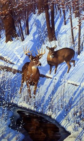 Michael Sieve Shadows of Bowhunting- Whitetail Deer