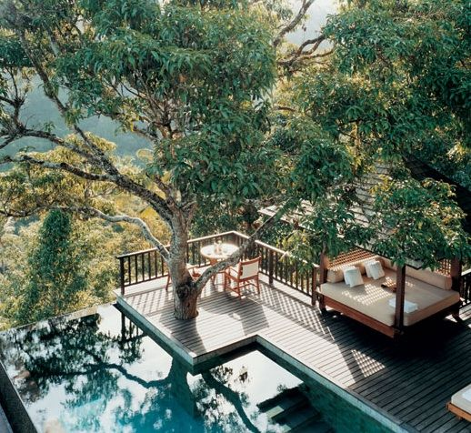 Pool and Deck with Tree