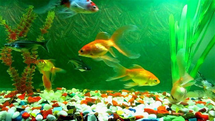 Get free aquariums live wallpaper google playstore for Online aquarium fish store