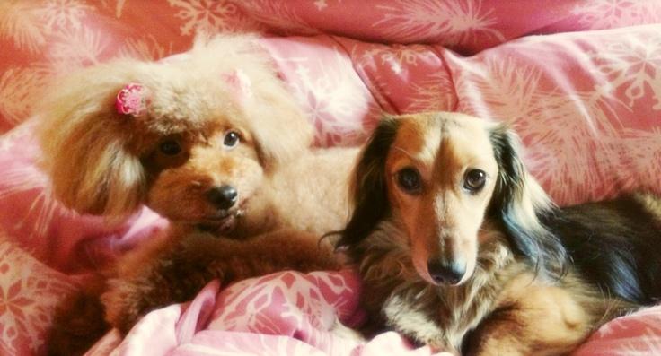 How cute my sweet dogs♡