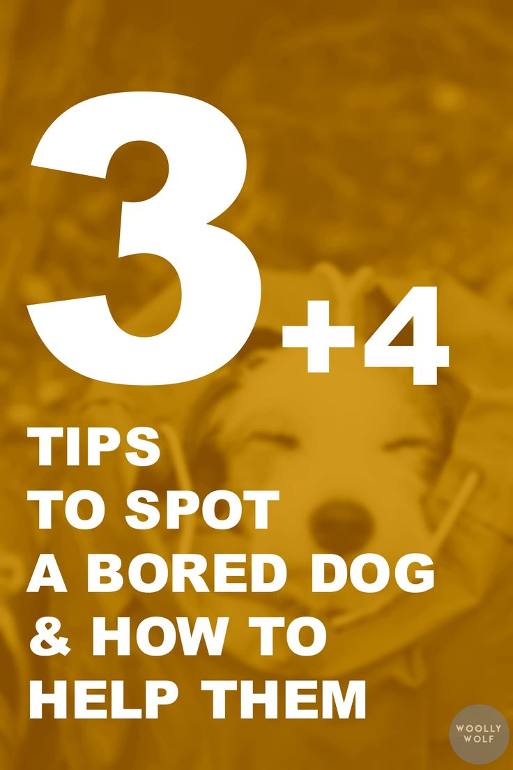 3+4 Tips to Spot a Bored Dog and how to help them. Barking, digging, chewing dog, help. Dog training ideas.