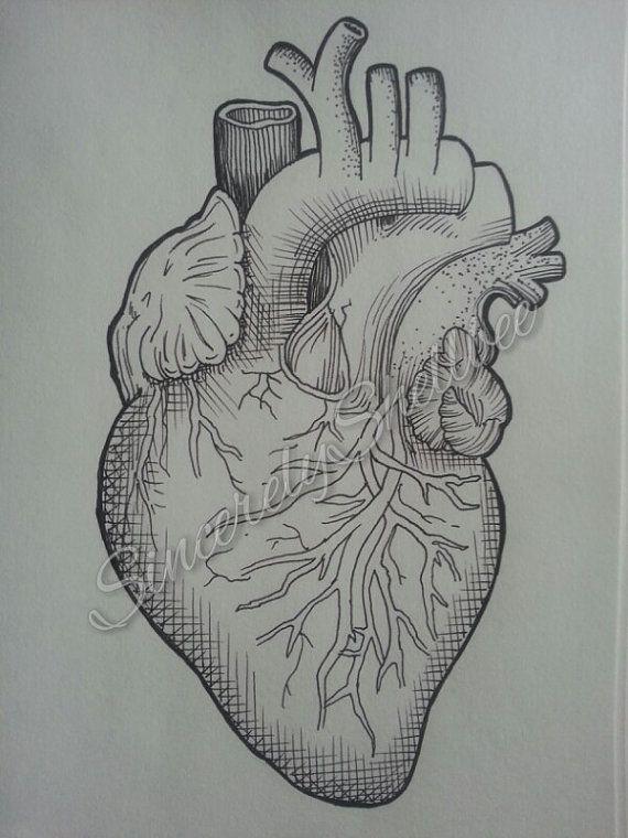 Anatomisches Herz Ink Drawing von SincerelyShellbee auf Etsy