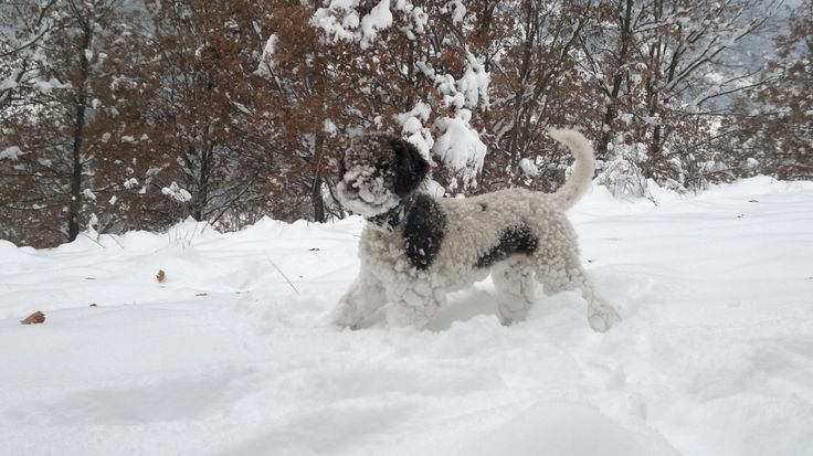 Billy in winter the snow