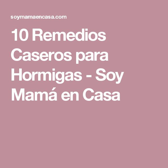 10 Remedios Caseros para Hormigas - Soy Mamá en Casa
