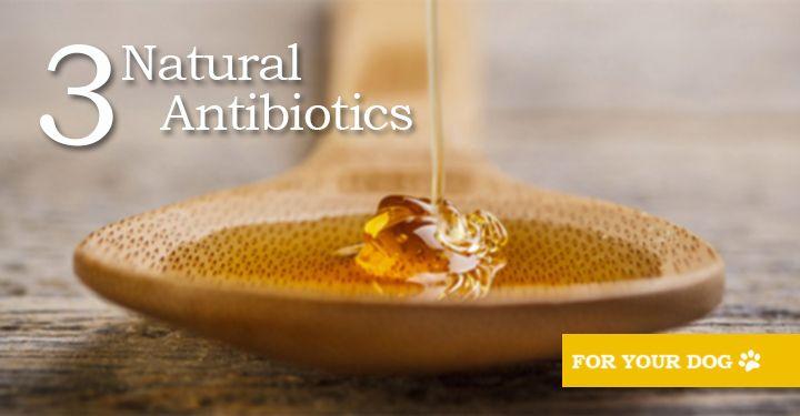 3 natural antibiotics