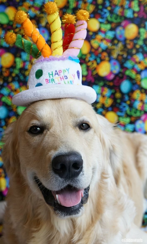 Картинка с собакой на день рождения, чего можно