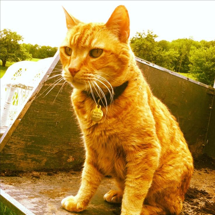 My other favorite gardening helper