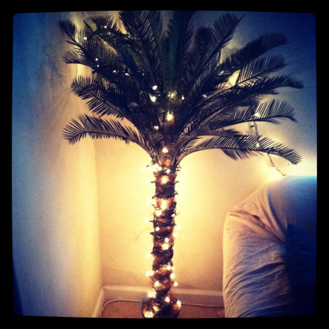 #DIY Lighted Palm Tree! Wrap #Christmas Lights Around The Tree, Perfect  Touch