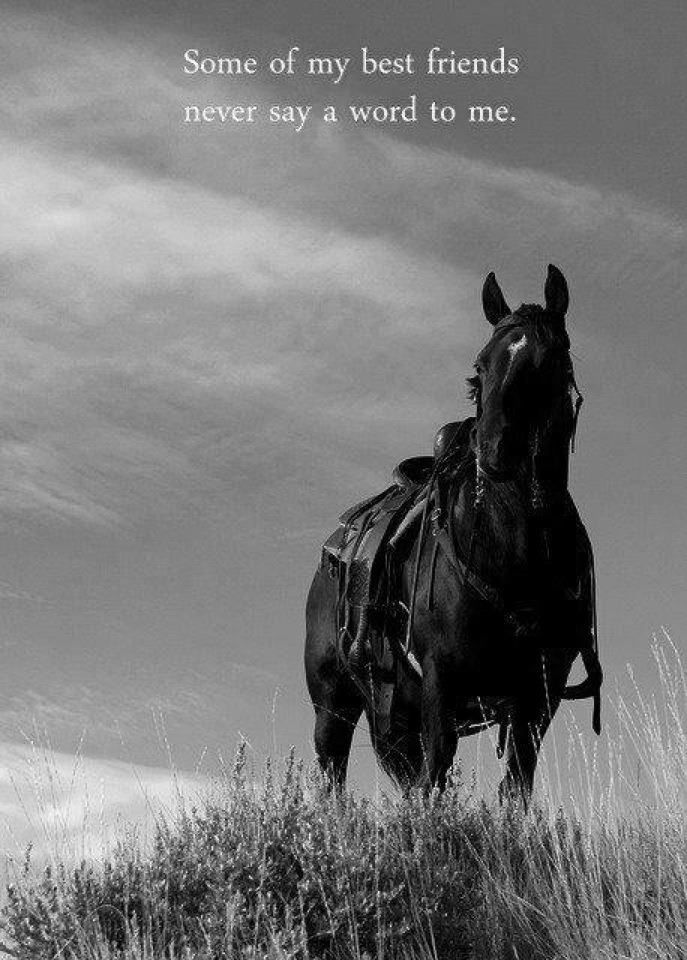horse photos with quotes | Quote of the Week – #5 | Suburban Cowgirl