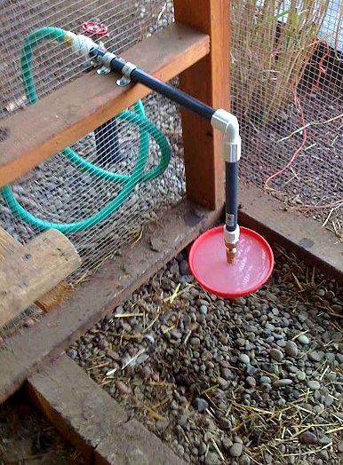 Automatic waterer in chicken coop