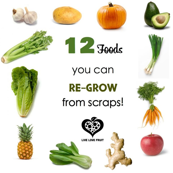 Grow Fruits And Vegetables From Kitchen Scraps: 164 Best Images About Vegetarian, Vegan, & Side Dishes On