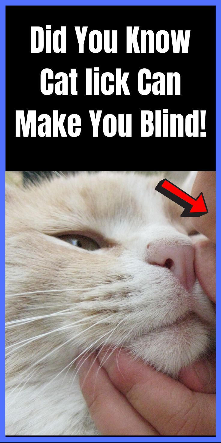 Did You Know Cat lick Can Make You Blind!