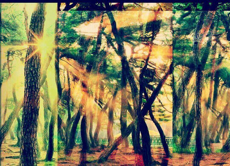 Grosser Geist, Du hast die Erde heilig gemacht, wie auch meinen Körper, darum will ich in deinem Namen die Erde heilig halten, jeden Grashalm achten und die Blumen und Bäume ehren. Mit der Verehrung alles Lebendigen wächst meine Seele und mein Leib wird stark im Rhythmus deiner Sonne und deines Mondes.                               Indianische Weisheit