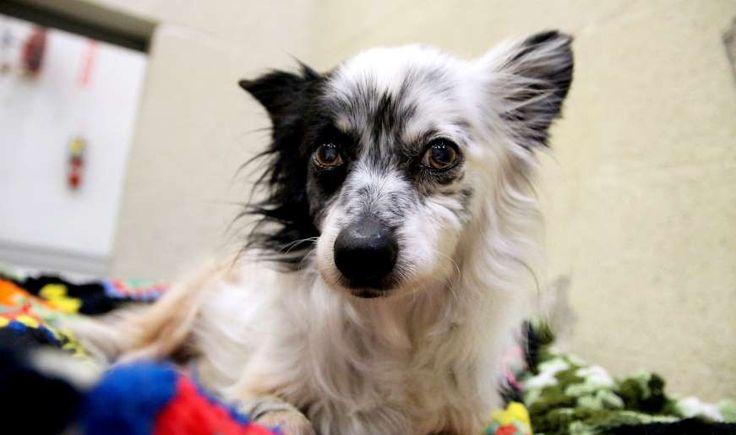Puppy adoption atlanta humane society