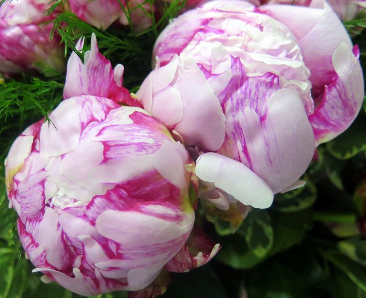 Sweet and fragrant