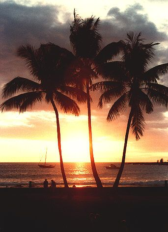 #HawaiiFavorite Places, Pearls Harbor, Palms Trees, Palm Trees, Hawaiian Sunsets, Beautiful Sunsets, Hawaiian Paradis, Hawaii Sunsets, Tropical Places