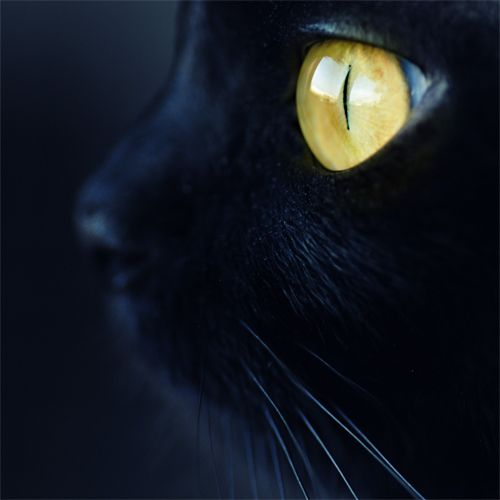 : Cat Art, Black Kitty, Cat Eye, Black Cats, Cat Facts, Green Eye, Cat Black, Animal, Baby Cat