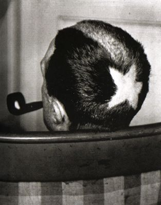Tonsure (Marcel Duchamp), 1919 by Man Ray.