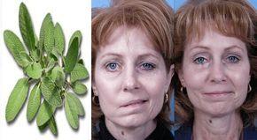 La salvia es un arbusto de hoja perenne con tallo de vellosidad fina y hojas de un verde grisáceo con margen dentado, su flor posee un color violeta. Esta hierba además de ser agradable al