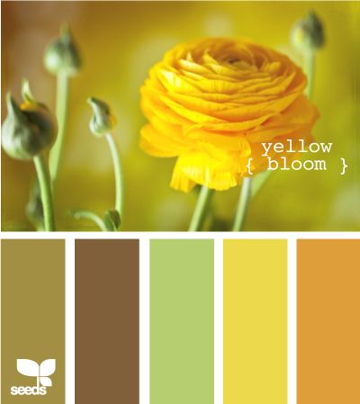 browns, green, yellow for kitchen (not the dark orange/yellow on the right) [http://www.design-seeds.com/search/label/flora]
