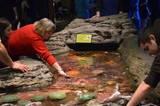 Seattle Aquarium touch pool