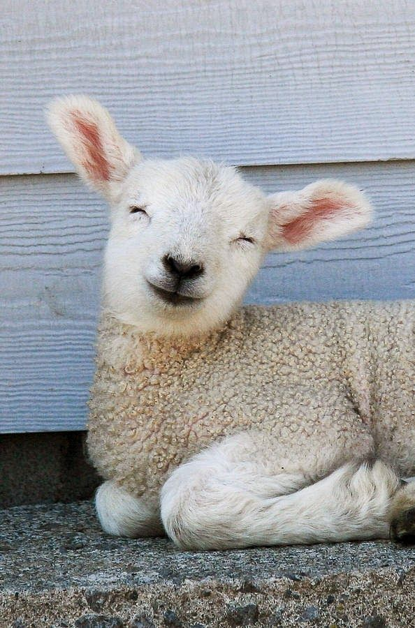 """Sheep N""""ewe""""s and stuff Every once in a while we like to"""