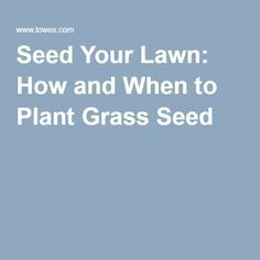 Very thorough instructions for planting new grass or repairing patchy lawn.