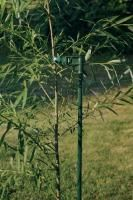 Tree Stake from Stark Bro's - stake the apple trees