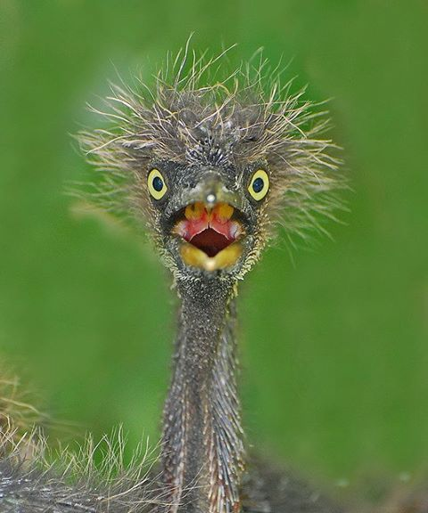 Birds surprise look. I can think of 1000 ways to caption this and text it as my answer! ROFL!