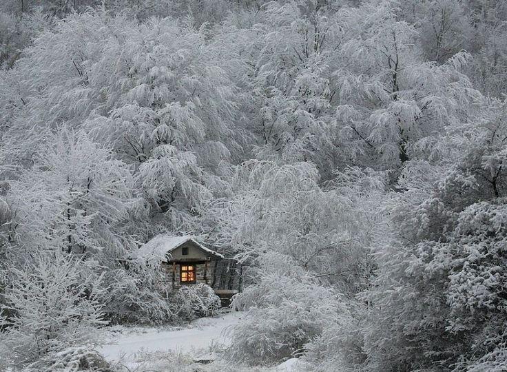 casa nel bosco innevato