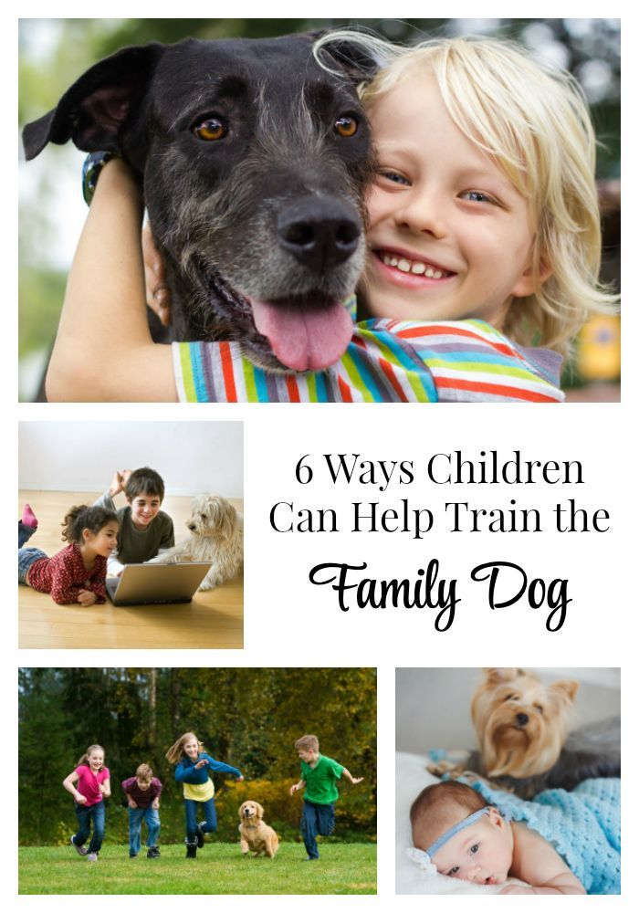 6 Ways Children Can Help Train The Family Dog Use These Tips To