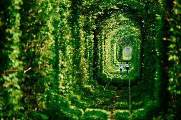 世界で最も美しい木のトンネル11選に関連した画像-02 ・愛のトンネル(ウクライナ) 世界で最もロマンチックなトンネルと言っても良いでしょう、ウクライナにある「愛のトンネル」です。電車が走るときは騒々しいのですが、そうでないときには恋人同士が幻想空間に浸れるスポットとなっています。