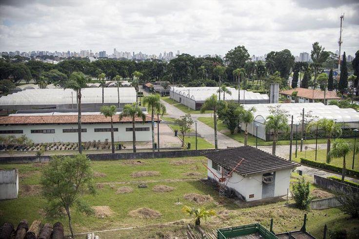 Horto Municipal do Guabirotuba aberto para visitação guiada com atividades ambientais. Foto: Gabriel Rosa/SMCS