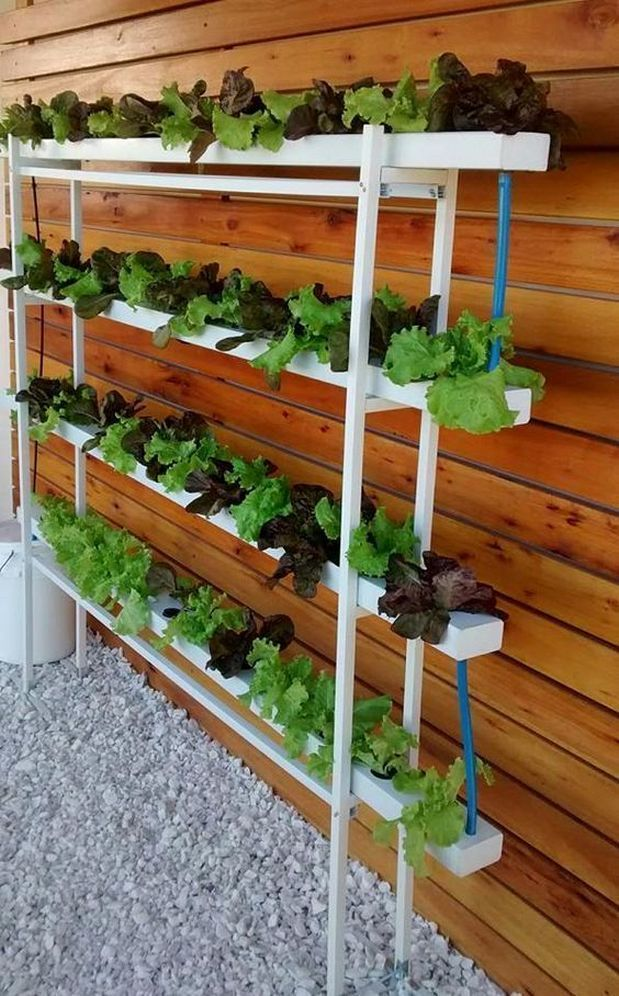 Hydroponic Gardening For New Beginners 5 Garderninghydroponic Hydroponicgard Indoor Vegetable Gardening Hydroponic Gardening Vertical Garden Indoor