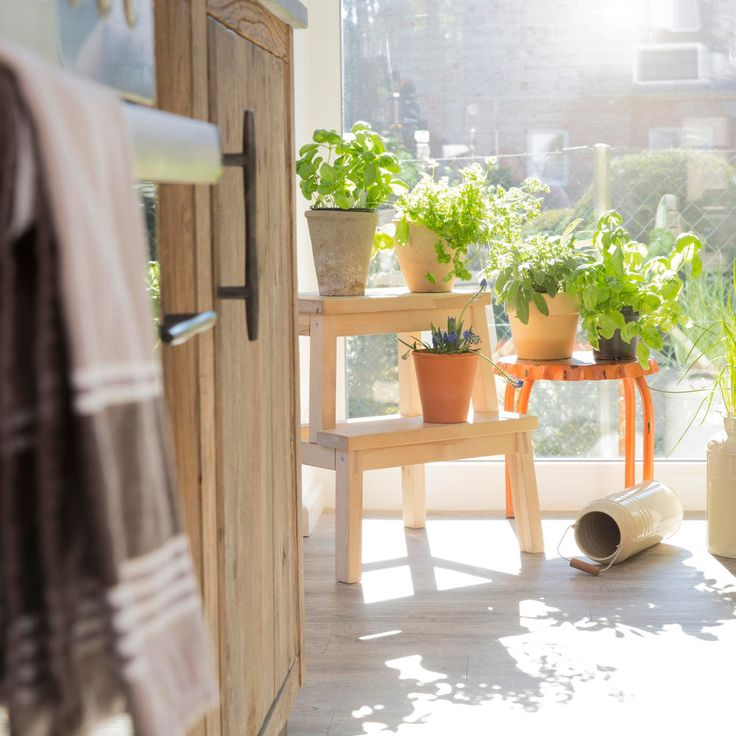 16 Herbs You Can Grow Indoors All Year Long Growing Food 400 x 300