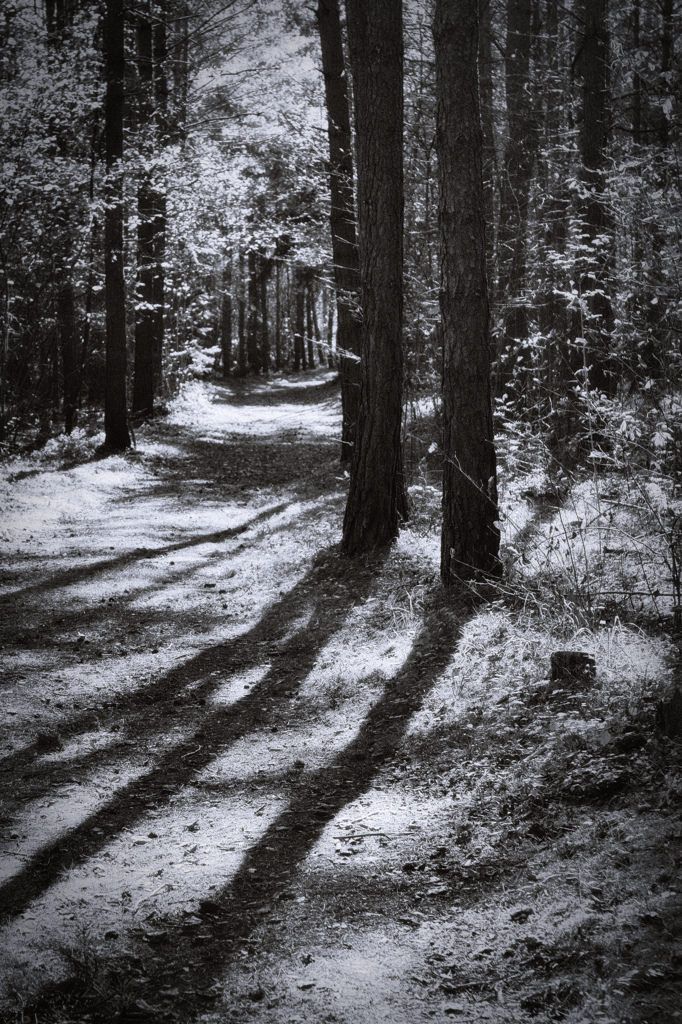 bwstock.photography  //  #forest #shadows