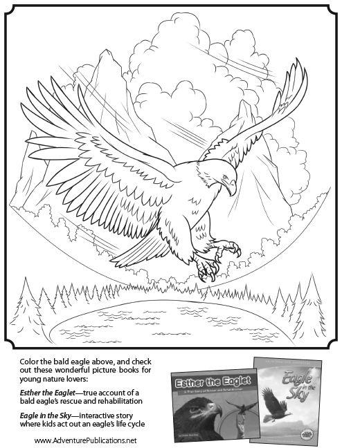 Bald Eagle Coloring Page