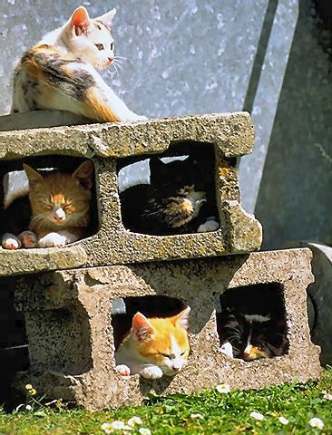 Variety of felines, laying in cement blocks, for the warmth