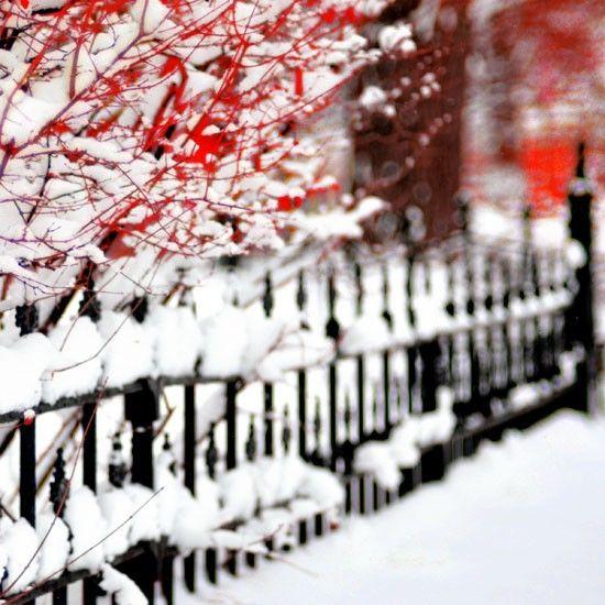 Winter Fence 5x5 Print Christmas Snow Photograph by birdandbloke, $15.00