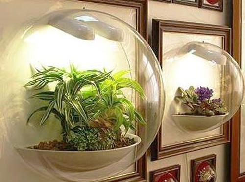 19 best images about terrariums on pinterest gardens miniature and plants - Indoor plants for shade ...