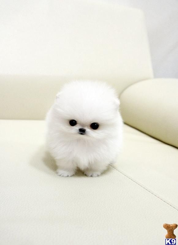 On the outside its all cute and adorable but on the inside its planing the murder of your entire family : )