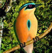 central America Birds and Butterflies - Buscar con Google