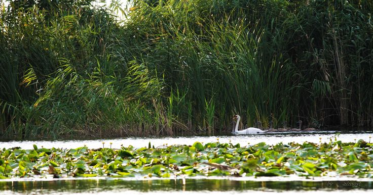 The Danube Delta 1