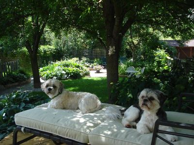 Here's Benzi's entry for the #ShowUsYourGarden photo contest! What cute pups! To enter or to vote visit https://www.facebook.com/TamarackHomes?v=app_448952861833126=1