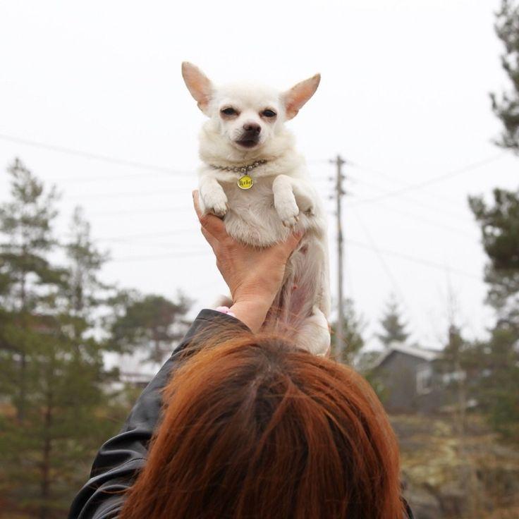 Rebel Dog | FURRY TALES, www.furrytales.no