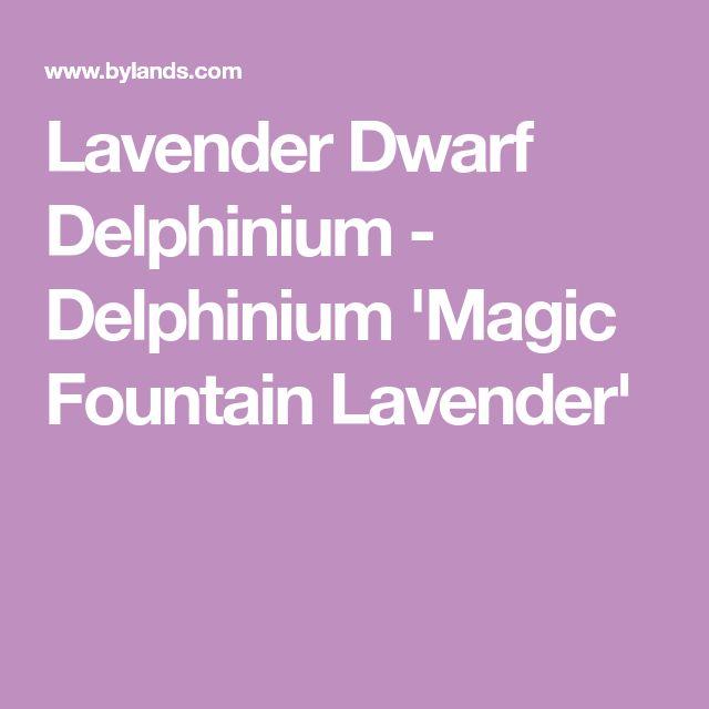 Lavender Dwarf Delphinium - Delphinium 'Magic Fountain Lavender'