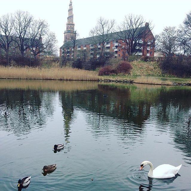 They follow us!!but so cute!  #Denmark #Copenhagen #Europe #travel #travelblogger #blogger #beautiful #love #adventure #travellikedance #gopro #sponsorship #デンマーク #ヨーロッパ #lake #nature #swan #castle #beautifulplace #bird #amor #follow #winter #sns