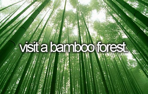bucket list : visit a bamboo forest